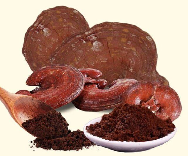 Sử dụng nấm linhchi bảo vệ sức khỏe - Tổng hợp 7 điều nên biết về nấm linh chi Rica